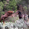 """The Vanishing Wild Horse"" Series shots from 07,08, 09 : ""Now you see them....soon you won't.""