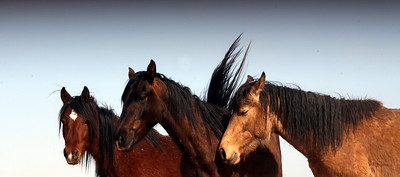"Lifesavers Wild Horse Rescue..""Horses of The Sky"" Series"