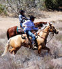 Indian cowboy horse training